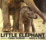 LITTLE ELEPHANT by Miela Ford