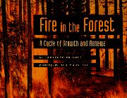 Cover art for FIRE IN THE FOREST