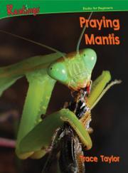 PRAYING MANTIS by Domini Taylor