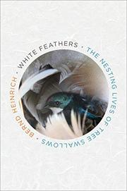 WHITE FEATHERS by Bernd Heinrich