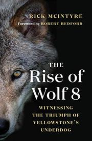 THE RISE OF WOLF 8 by Rick McIntyre
