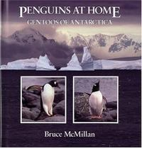 PENGUINS AT HOME