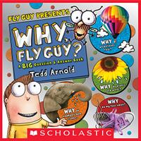 WHY, FLY GUY?