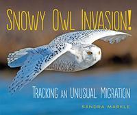 SNOWY OWL INVASION!