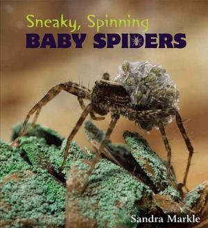 SNEAKY, SPINNING BABY SPIDERS