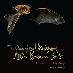 THE CASE OF THE VANISHING LITTLE BROWN BATS