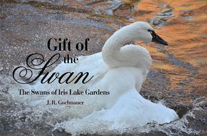 GIFT OF THE SWAN